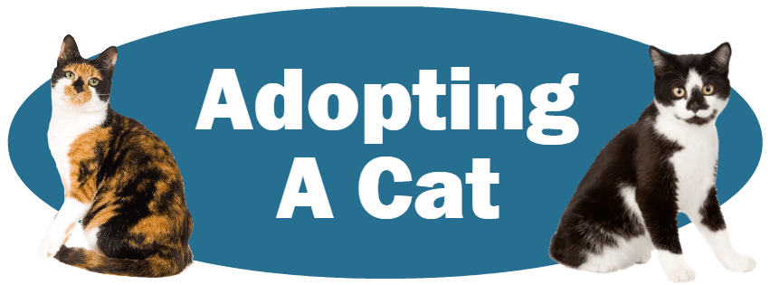 CLICK HERE for more information about adopting a cat!