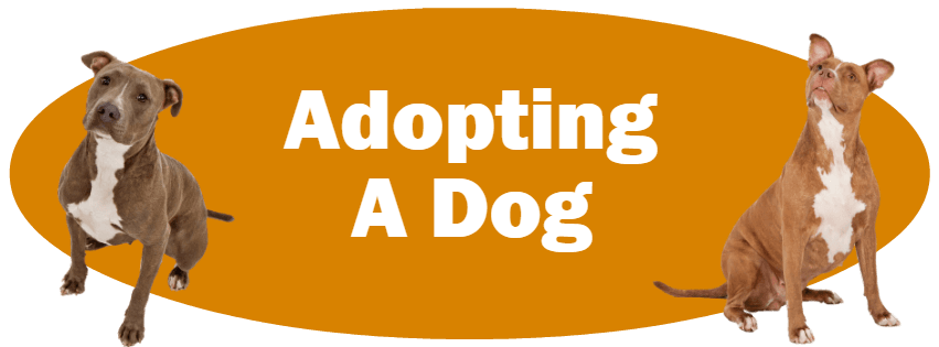 CLICK HERE for more information about adopting a dog!