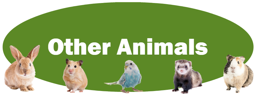 CLICK HERE for more information about adopting other small animals!