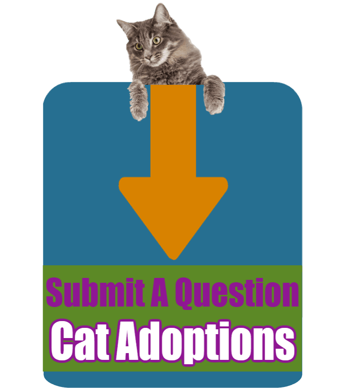 CLICK HERE to submit your online question about Cat Adoptions