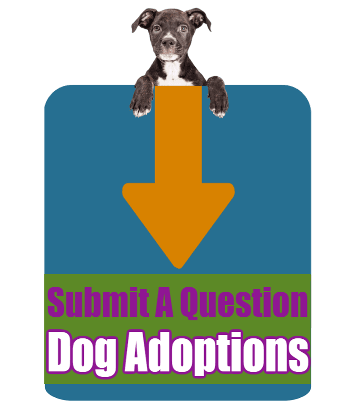 CLICK HERE to submit your online question about Dog Adoptions