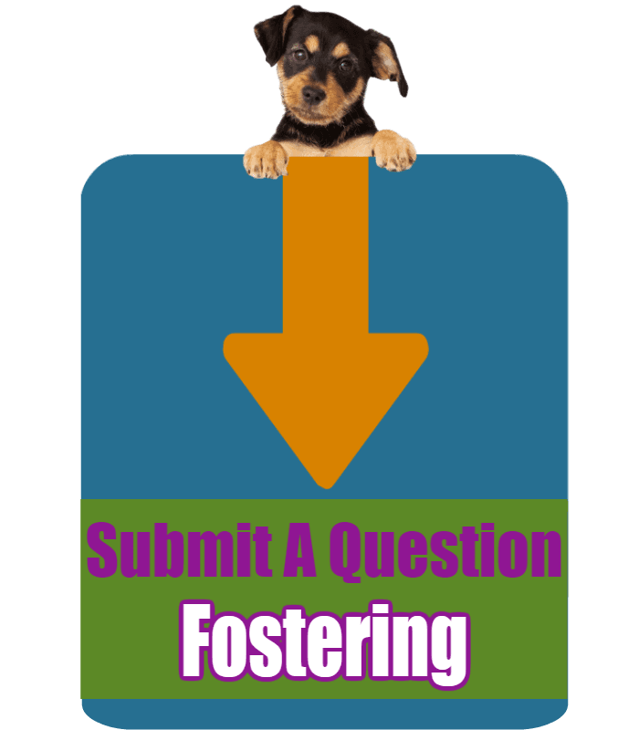 CLICK HERE to submit your online question about Fostering