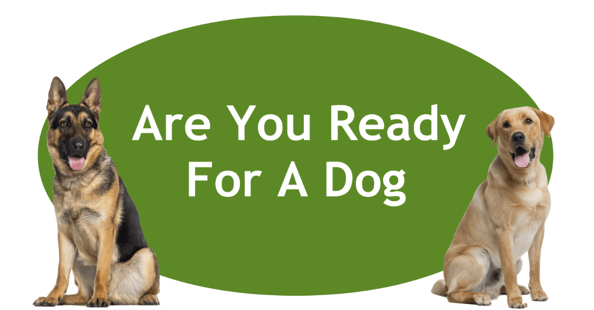 Are You Ready For A Dog Page Banner