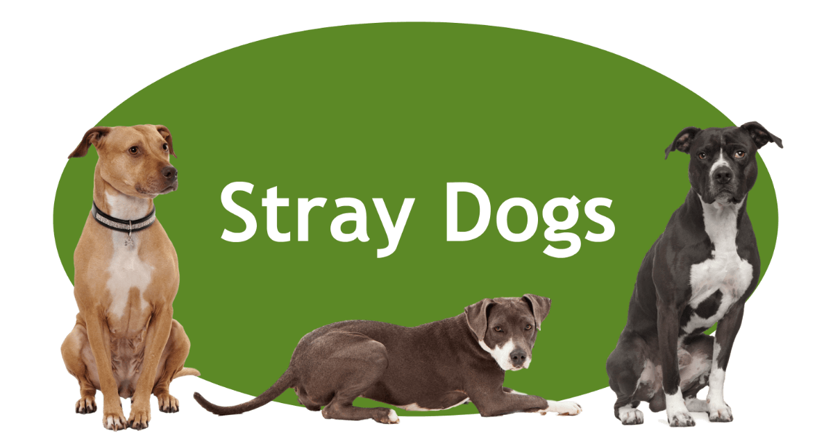 Stray Dogs Page Banner