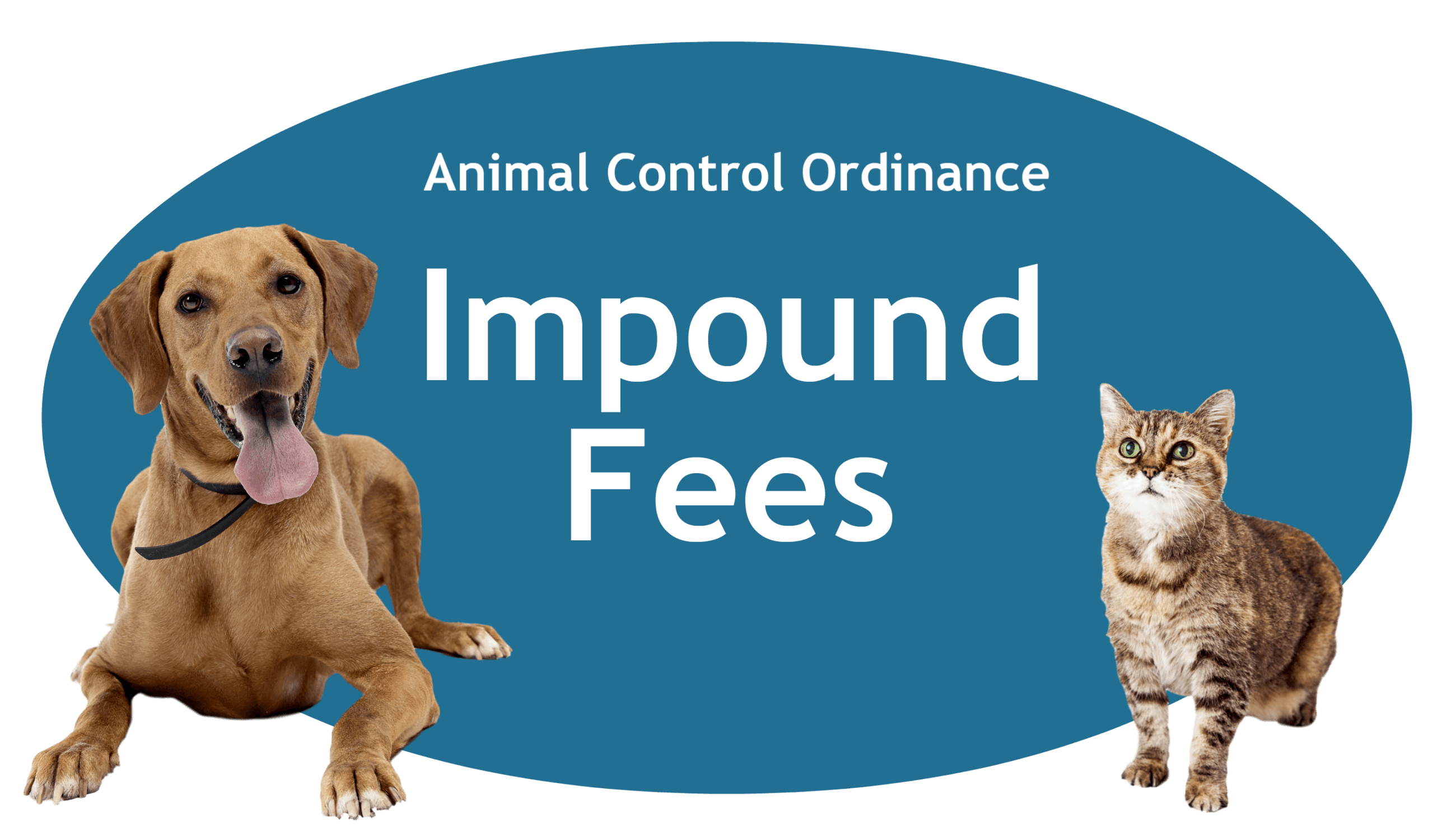 Impound Fees Page Banner