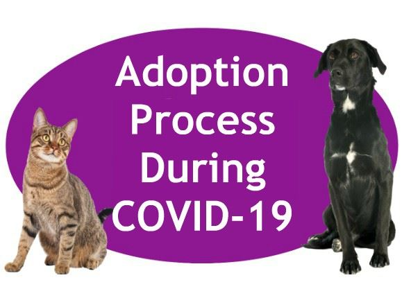 COVID-19 Adoption Process