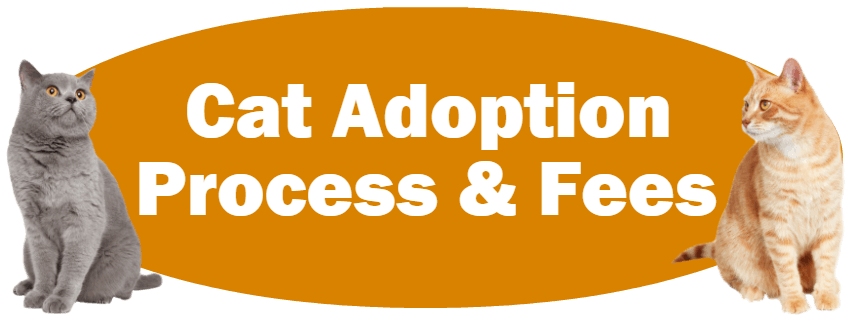 CLICK HERE For Information About The Cat Adoption Process And Fees