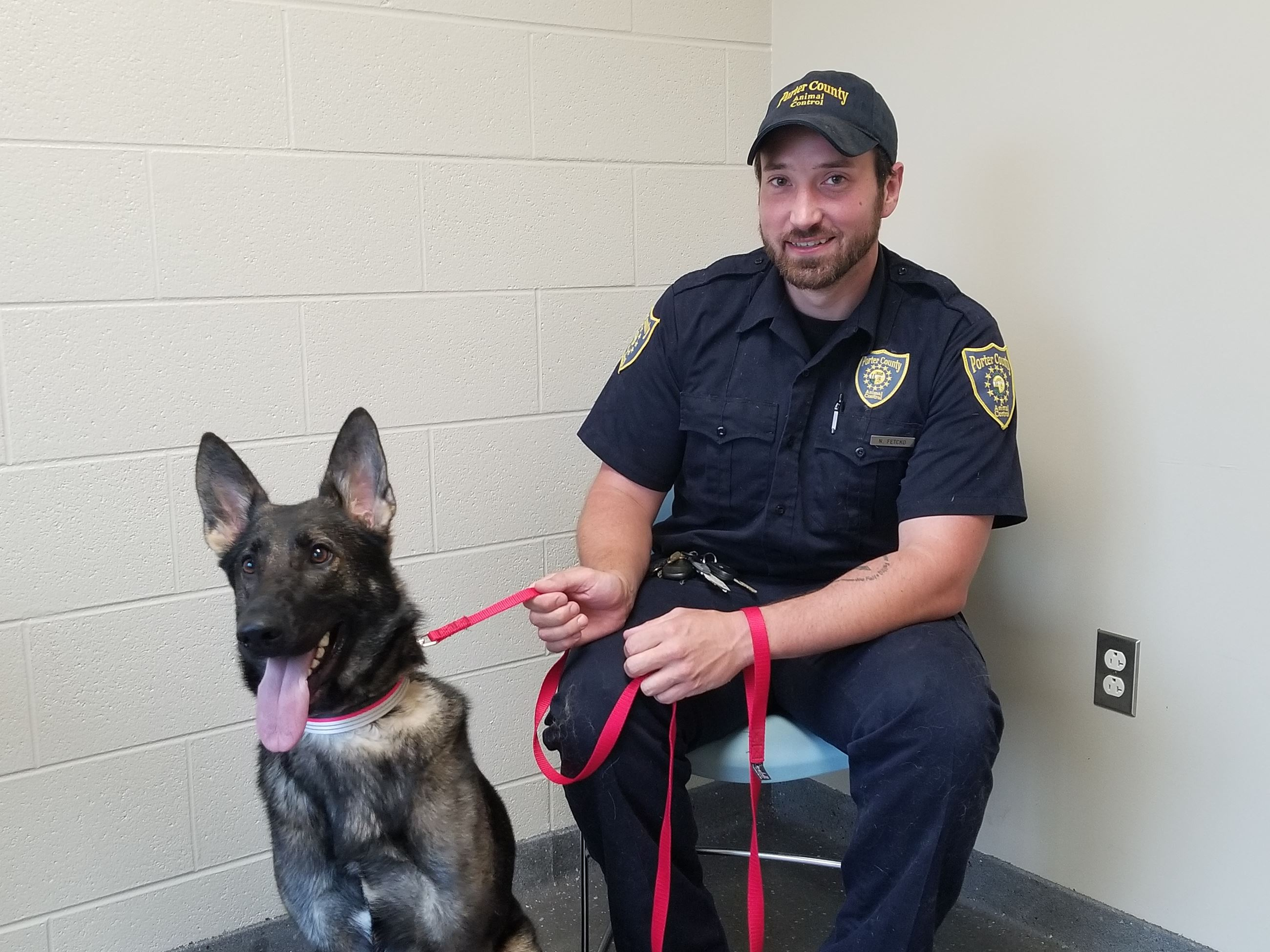 Photo of animal control officer with German Shepherd dog.