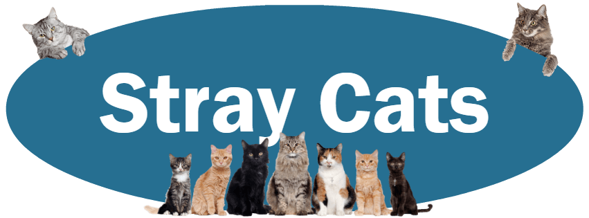 CLICK HERE for what to do and NOT do if you find a stray cat.