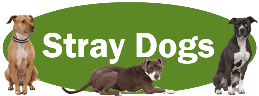 CLICK HERE for what to do and NOT do if you find a stray dog.