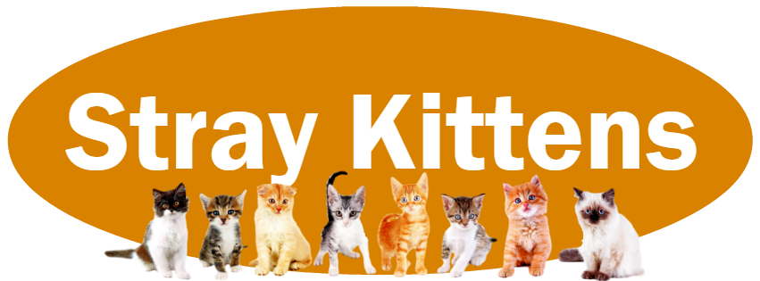 CLICK HERE for what to do and NOT do if you find stray kittens.