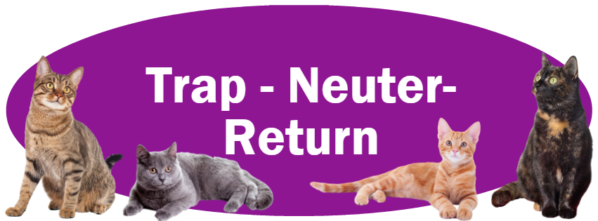 CLICK HERE for information about Trap-Neuter-Return