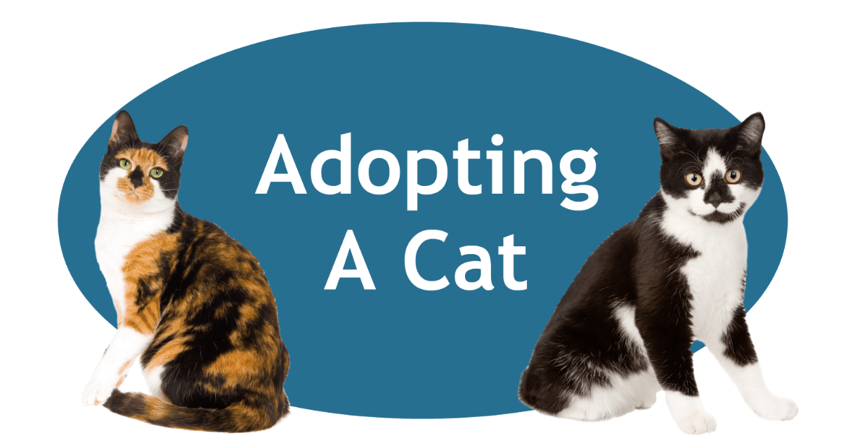 Adopting A Cat Page Banner