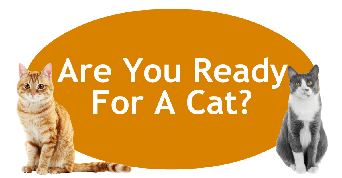 Are You Ready For A Cat Page Banner