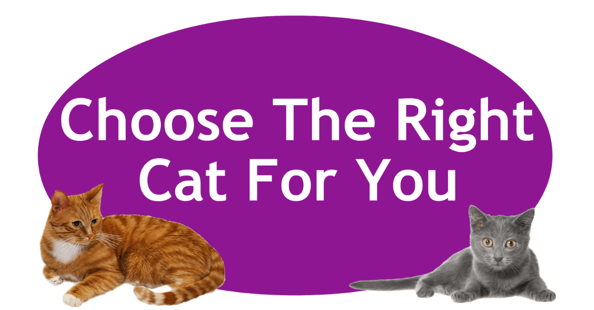 Choose The Right Cat For You Page Banner