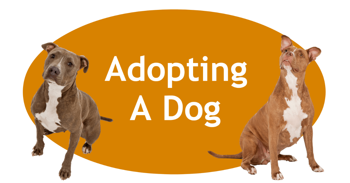Adopting A Dog Porter County Animal Shelter In