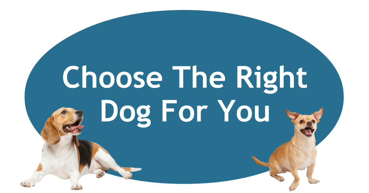 Choose The Right Dog For You Page Banner