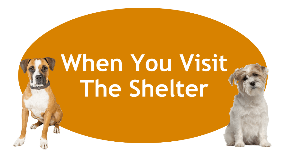 When You Visit The Shelter Page Banner