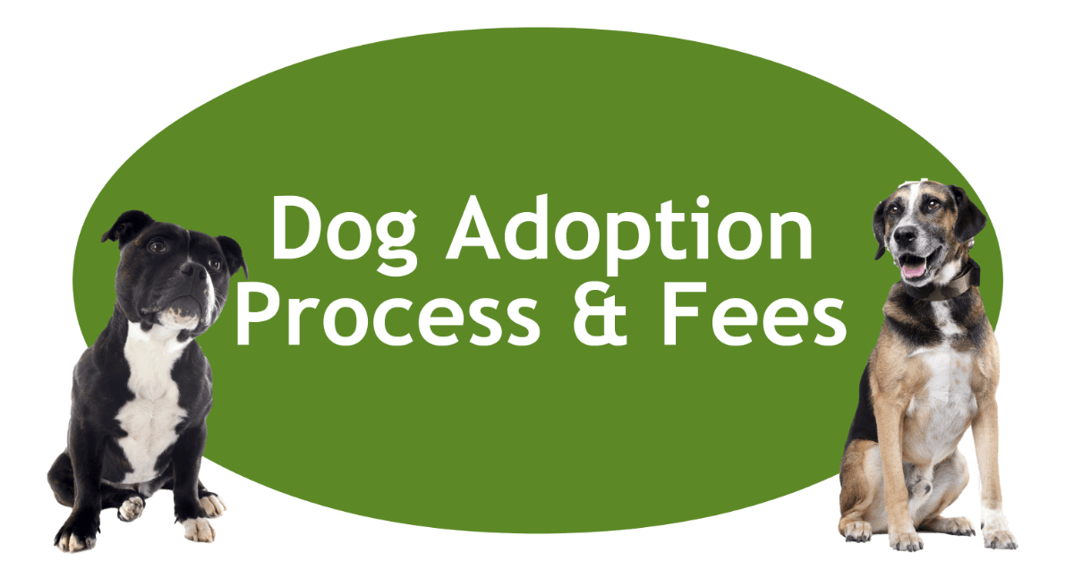 Dog Adoption Process And Fees Page Banner