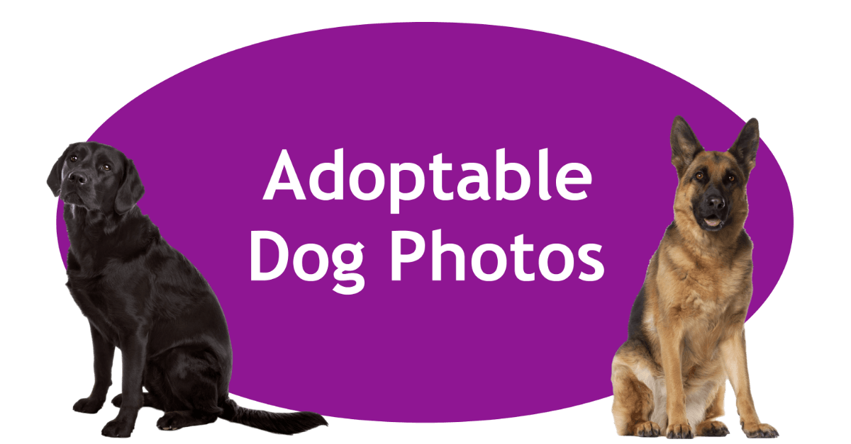 Adoptable Dog Photos Page Banner