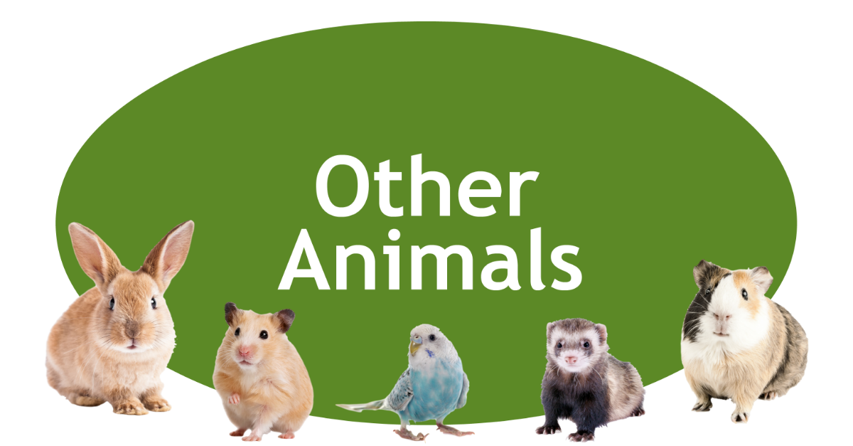 Other Animals Page Banner