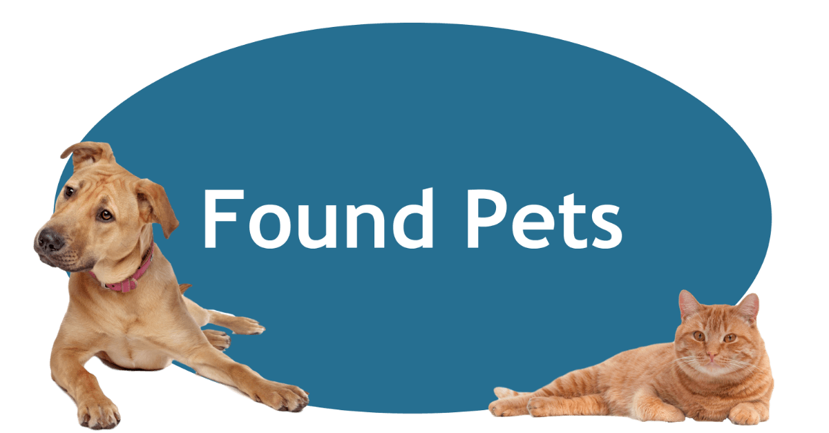 Found Pets Page Banner