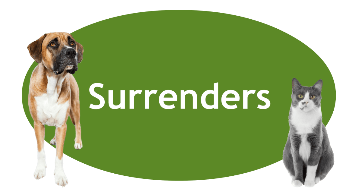 Surrenders Page Banner