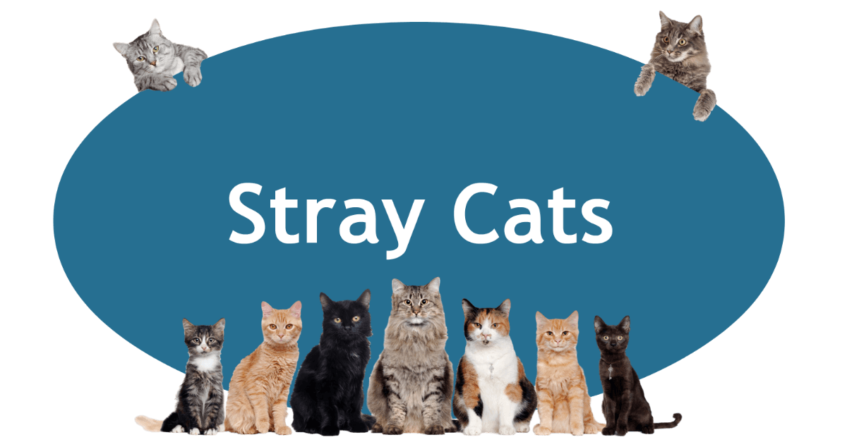 Stray Cats Page Banner