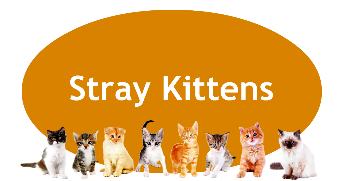 Stray Kittens Page Banner